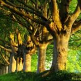 Инвестиции в будущее: в охрану природы вложили почти на 10% больше