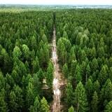 15-17 сентября — Российские дни леса