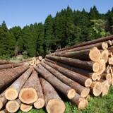 Глава Минприроды пригрозил остановить экспорт леса в Китай