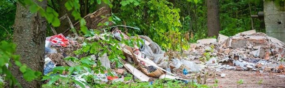 ОНФ предлагает возложить ответственность за уборку свалок в лесах на муниципальные власти